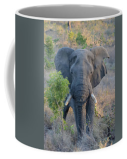Coffee Mug featuring the photograph Flapping In The Wind Head-on by Jeff at JSJ Photography