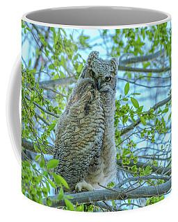Fledgling Moment At Sundown Coffee Mug