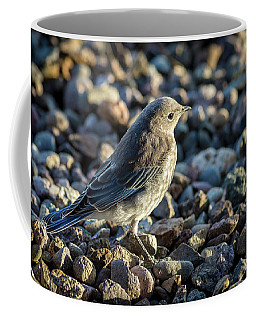 Fledgling Mountain Bluebird Coffee Mug