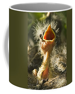 Fledgling Yellow Warbler Coffee Mug