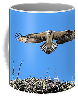 Coffee Mug featuring the photograph Flegeling Osprey by Debbie Stahre