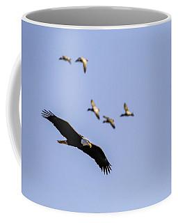 Flight Pattern Coffee Mug by Ray Congrove
