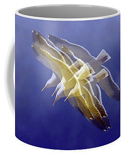 Coffee Mug featuring the photograph Floating Gulls by Howard Bagley