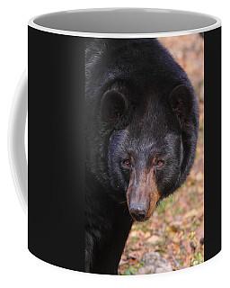 Florida Black Bear Coffee Mug