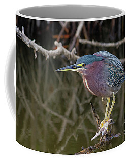 Florida Green Heron Coffee Mug