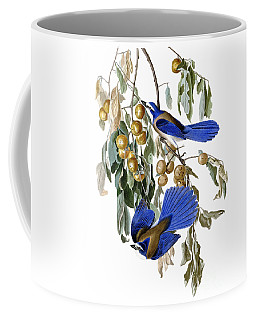 Coffee Mug featuring the painting Florida Jay And Wild Persimmon Tree by Pg Reproductions