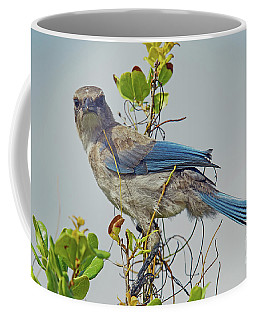 Florida Juvie Scrub Jay Coffee Mug