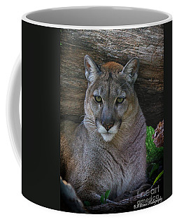 Florida Panther Coffee Mug