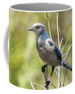 Florida Scrub Jay Coffee Mug