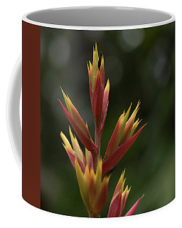 Coffee Mug featuring the photograph Flower At Selby Gardens by Richard Goldman