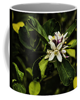 Flower Of The Lemon Tree Coffee Mug