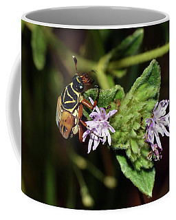 Flower Scarab - Trigonopeltastes Delta Coffee Mug