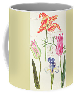 Flower Studies  Tulips And Blue Iris  Coffee Mug
