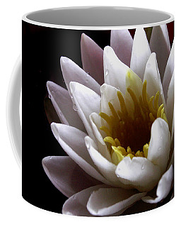 Coffee Mug featuring the photograph Flower Waterlily by Nancy Griswold
