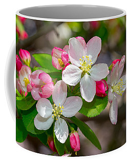 Flowering Cherry Tree Blossoms Coffee Mug