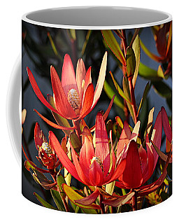 Coffee Mug featuring the photograph Flowers At Sunset by AJ Schibig