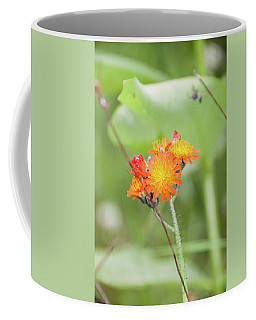 Flp-4 Coffee Mug