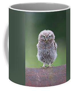 Fluffy Little Owl Owlet Coffee Mug
