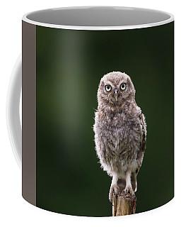 Fluffy Mcfluff-face Coffee Mug