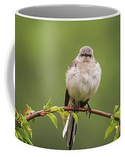 Fluffy Mockingbird Coffee Mug by Terry DeLuco