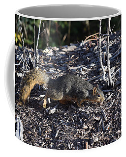 Squirrel Pprh Woodland Park Co Coffee Mug