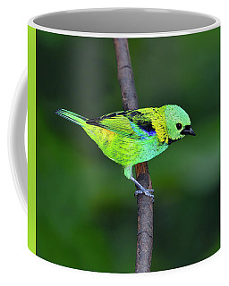Forest Edge Coffee Mug by Tony Beck