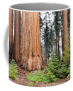 Coffee Mug featuring the photograph Forest Growth by Peggy Hughes