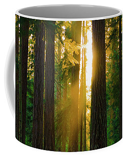 Forest Sunset Coffee Mug
