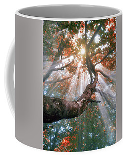 Forest With Fog And Sun Rays Coffee Mug
