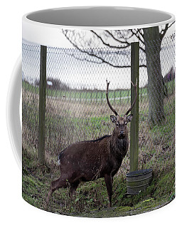 Formosan Sika Stag Coffee Mug