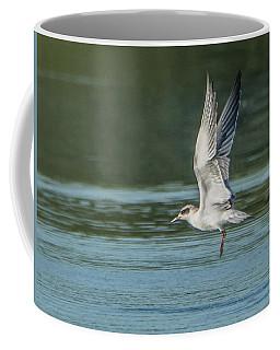 Forster's Tern 092017-5021-1cr Coffee Mug