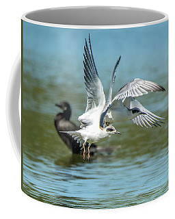 Forster's Tern 5497-092117-2 Coffee Mug