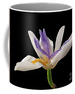Fortnight Lily On Black Coffee Mug