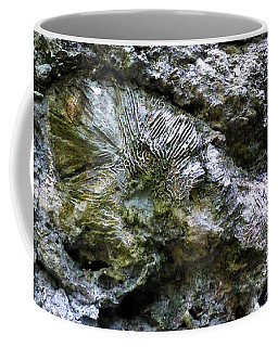 Coffee Mug featuring the photograph Fossil In The Wall by Francesca Mackenney