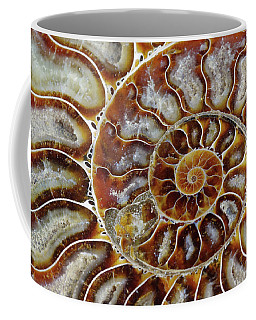 Fossilized Ammonite Spiral Coffee Mug
