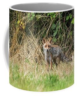 Fox In The Woods Coffee Mug