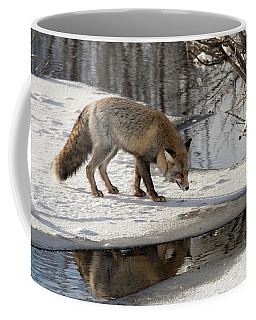 Coffee Mug featuring the photograph Fox Reflection by Ronnie and Frances Howard