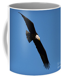 Free Flying Bald Eagle Coffee Mug by Kathy M Krause