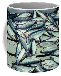 Coffee Mug featuring the photograph Fresh Caught Herring Fish by Edward Fielding