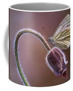 Fresh Pasque Flower And White Butterfly Coffee Mug by Jaroslaw Blaminsky