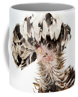 Frizzle Tolbount Polish Hen Coffee Mug