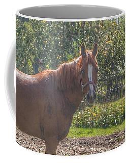 1010 - Froede Roads' Chestnut Brown Coffee Mug