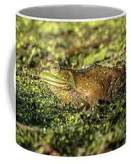 Coffee Mug featuring the photograph Frog Profile by Cheryl Baxter