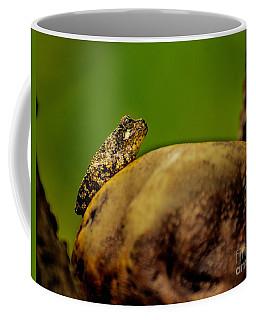 Frog Waits Coffee Mug