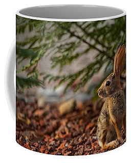 Coffee Mug featuring the photograph Frontyard Bunny by Dan McManus