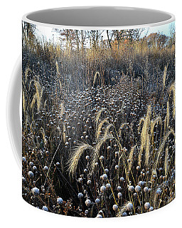 Frosted Foxtail Grasses In Glacial Park Coffee Mug