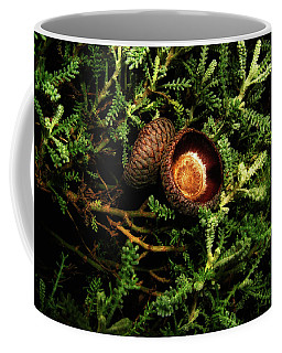Coffee Mug featuring the photograph Frosty Morning - Acorn Caps 001 by George Bostian