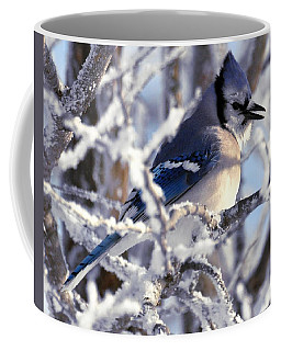 Frosty Morning Blue Jay Coffee Mug