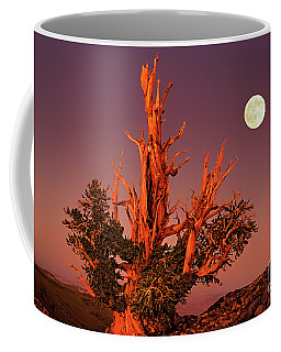 Coffee Mug featuring the photograph Full Moon Behind Ancient Bristlecone Pine White Mountains California by Dave Welling