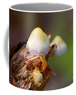 Coffee Mug featuring the photograph Fungi On A Stump by Sharon Talson